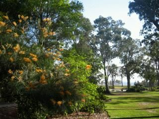 a glorious winters morning with Banksia flowers and gum trees