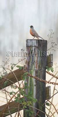 Morning Song - American Robin  www.levitskyart.com