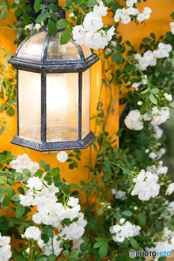 お庭の照明にもこだわりたい。クラシックでエレガントなものを選べば、洒落たヨーロッパのガーデン風になります。
