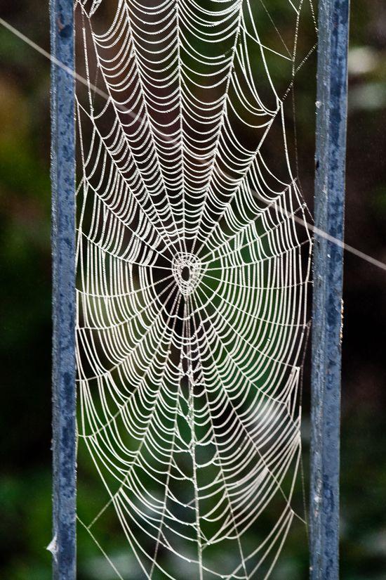 les 381 meilleures images 224 propos de toiles d araign 233 e sculptures et textures de fil sur