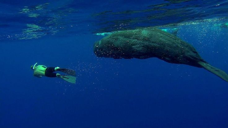 freediving with sperm-whales