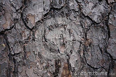 Brown bark pattern on tree