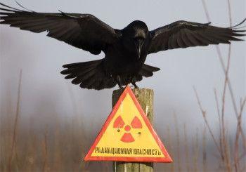 Только РФ может предотвратить ядерный апокалипсис – СМИ США | NovostiOnline
