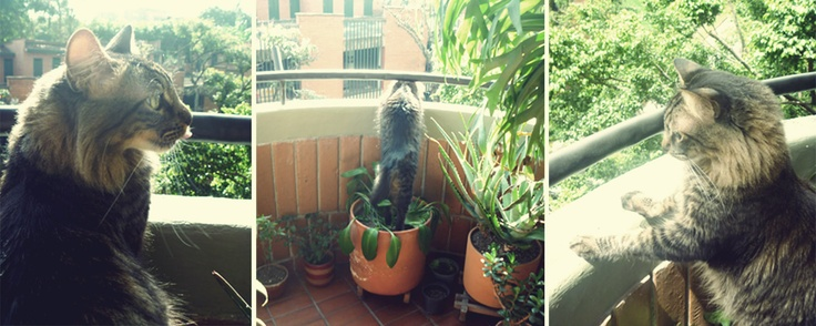 Spying from the balcony  ♥