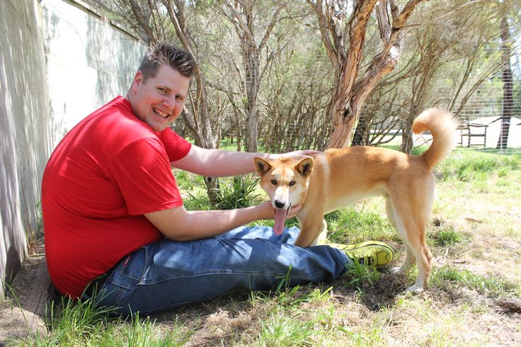 "Animal Encounter - Dingo "" Puppies"""