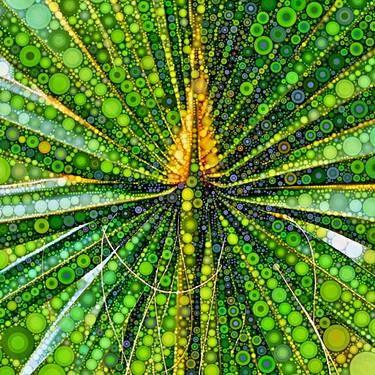 Mexican Fan Palm Leaf