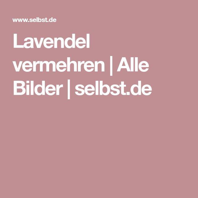 Lavendel vermehren | Alle Bilder | selbst.de