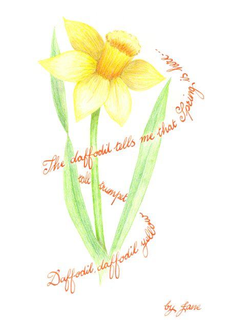 Jarní narcis - kaligrafické blahopřání