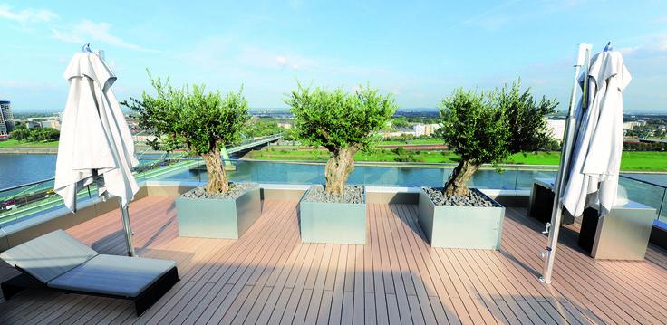 Blickfang auf der Terrasse sind drei über 200 Jahre alte, italienische Olivenbäume, die in Edelstahlpflanzkästen der Richard Brink GmbH & Co. KG eingepflanzt sind.