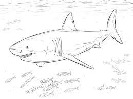bildergebnis für haifische zum ausdrucken | ausmalen, ausmalbilder, ausmalbilder fische