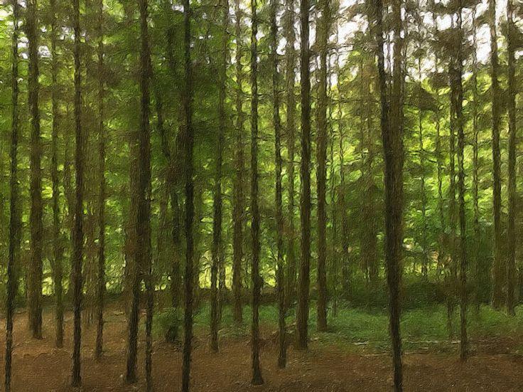 Forrest near Kiel, Germany