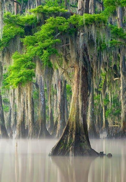 Beautiful Nature ~ trees