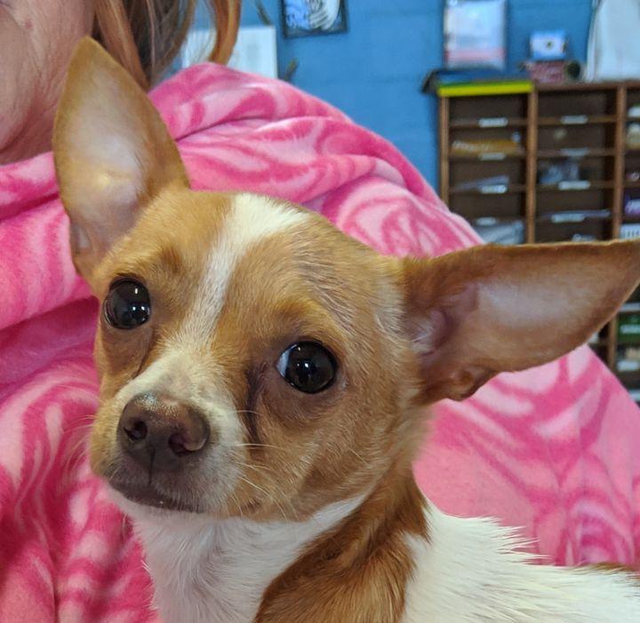 Adopt Chansa On Adoption Pet Adoption Rescue Dogs