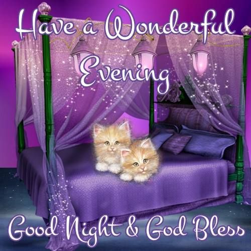 Image result for have a blessed evening cat gif