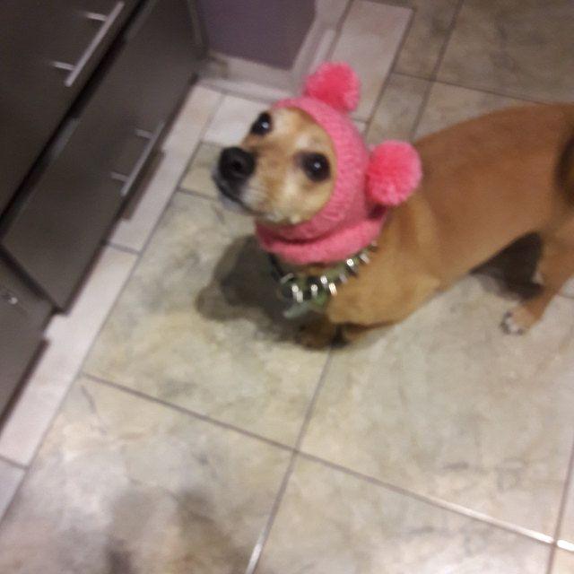 Knitting Pattern Teddy Bear Dog Hat Small Dog Bear Hat Bear Hoodie Bear Hood Teddy Bear Dog Costume Dachshund Hat Knit Doxie Hoodie Mini Dachshund Pom Dog Teddy Bear Dog