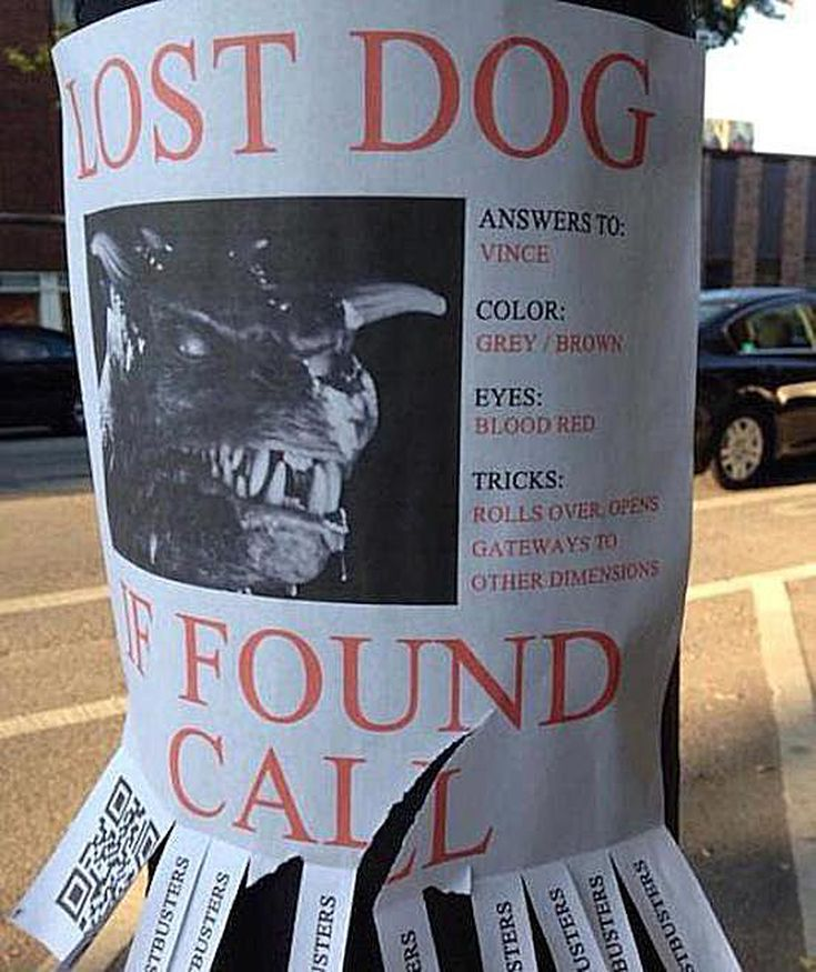 20 Funny Lost and Found Pet Posters: 20 Funny Lost and Found Pet Posters