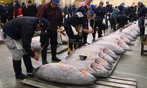"""#SmartHealthTalkTopPick: Is #Japan eating Tuna to extinction? How do we get them to stop? Global change in eating and fishing practices needs to change. That Red Snapper you are buying at a store or restaurant is probably 100% NOT what they say. Buy fish that reproduce quickly saves depleted supplies and ensures less plastic/heavy metal contamination.  Find large section on """"Sustainable Seafood"""" under our """"Resources"""" tab http://www.smarthealthtalk.com/sustainable-seafood-shopping.htm"""