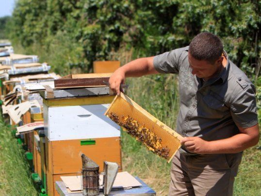 Beekeeper Daniel Ferencz inspects bee hives in a forest in Backo Petrovo Selo, Serbia, July 7, 2017, after a grant from the Hungarian government enabled him to buy a honey bottling machine, as well as bees and hives.  REUTERS/Bernadett Szabo #beekeepinggrants