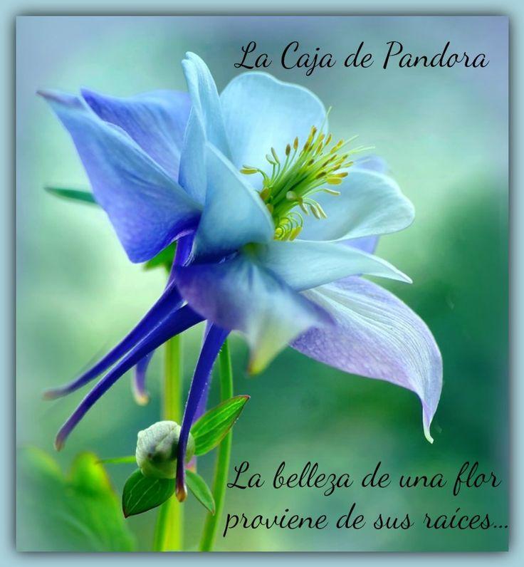 belleza, flor