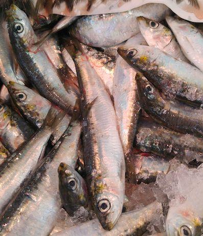 Provenance+:+Atlantique+Nord-Est Pour+une+personne+:+Cinq+Sardines/personne Saisonnalité+:+De+Mai+à+Octobre Vendues+en+lot
