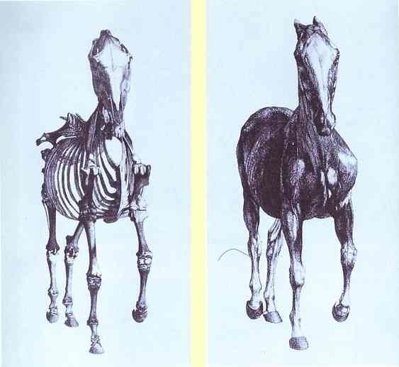 Frontal view of the skeleton of a horse, study No. 10 from 'The Anatomy of the Horse' - George Stubbs