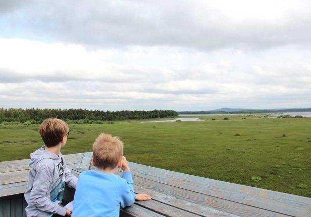 Store Mosse Nationalpark, Utsikt mot Stråkevedsberg i horisonten, skillingaryd.nu