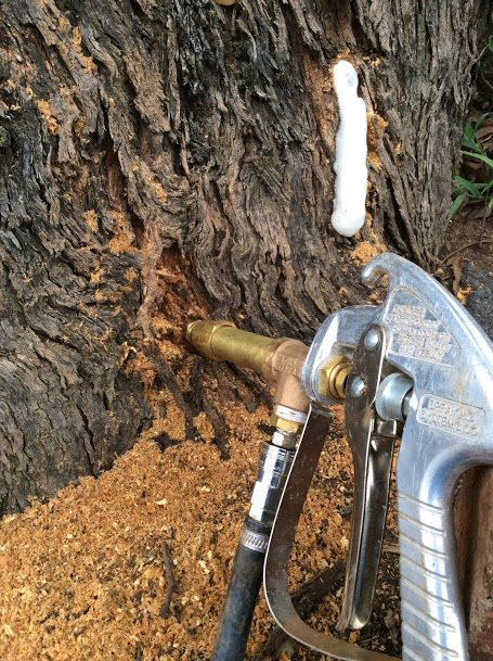 Tree Drilling into Termite nest