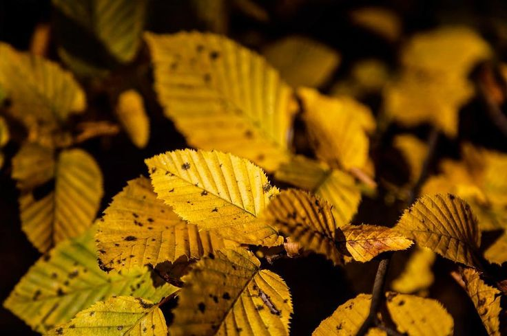 Everything is temporary it is just a matter of #time. #fall #autumn #yellow #picoftheday #instaquote #instadaily #share #colorsofnature #leaf #change