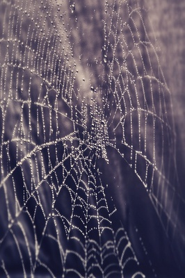 web: Created Spiders, Tangled Web, Spider Webs, Web Designs, Art Photography, Awesome Pin