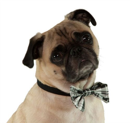 classy canine: Pet Products, Dogs, Doggie Bow, 10 00, Bowties, Dog Bow Ties, Dog Bows