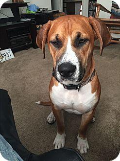 17 beste ideeën over Boxer Beagle Mix op Pinterest ... Beagle Boxer Mix Full Grown