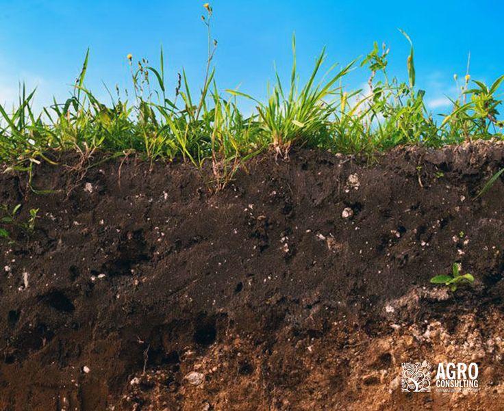 Conservación del suelo del olivar // Olive crop soil conservation