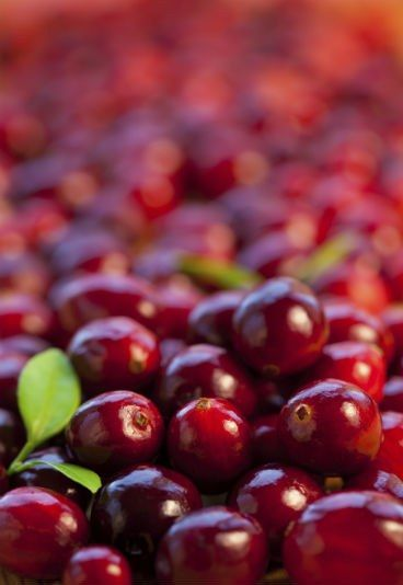 Benefícios do suco de cranberry - Cáries, que cáries?