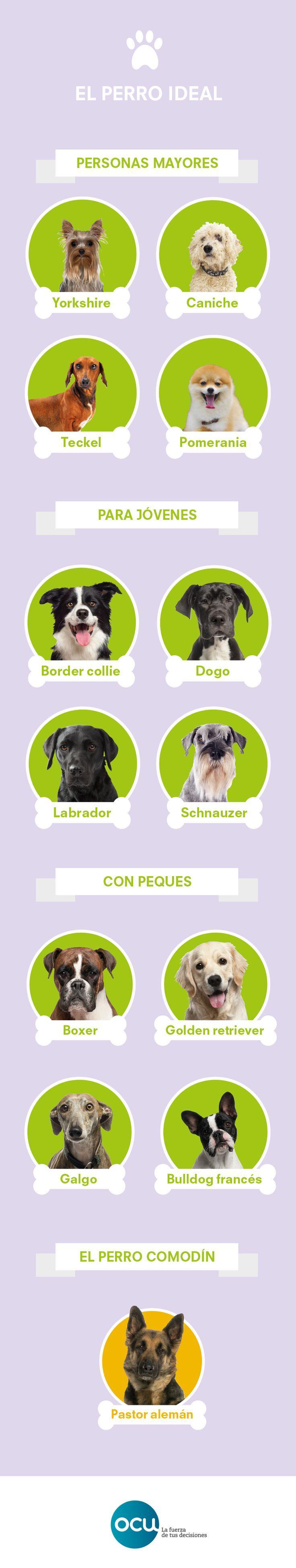 El mejor amigo del perro | OCU Consumity