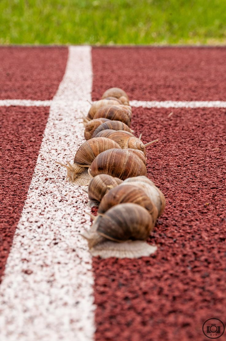 Snails on the racetrack. Oh Wait, jumpstart !! - it was a joke for my little Daughter =)