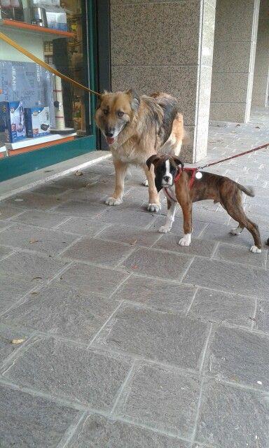 Rocco e Zac !