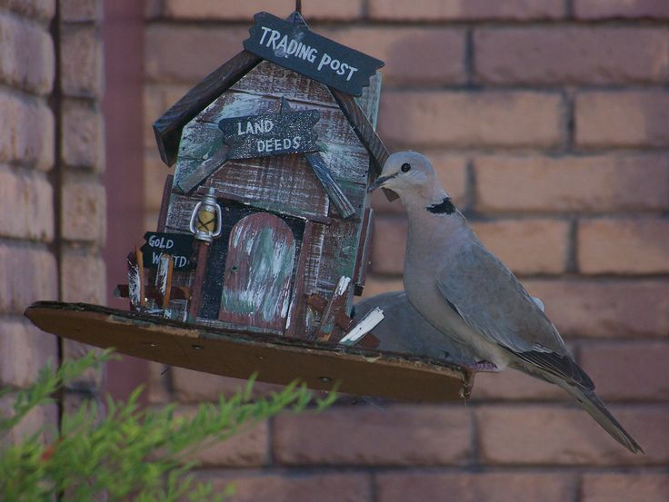 Doves enjoying the bird feeder