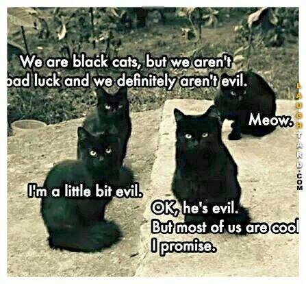 I love my black cat, she is very precious!