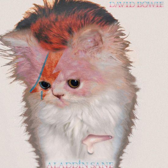 Kitty stardustAlbum Covers, Davidbowie, Baby Kittens, Kittens Covers, David Bowie, Covers Art, Bowie Kitty, Cat Parties, Aladdin