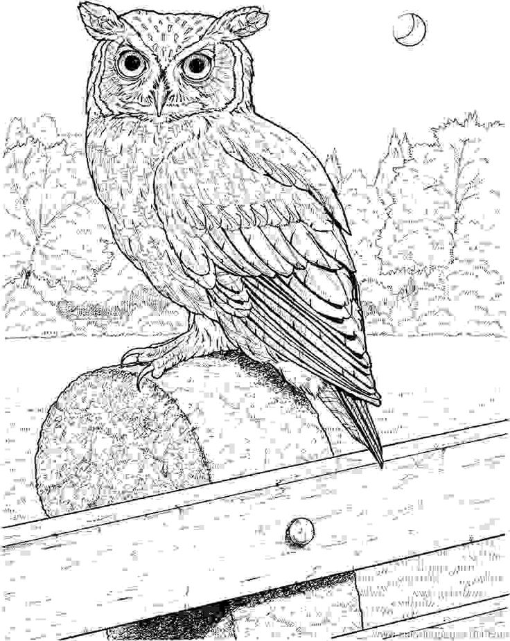 Image for Spesial Nature Great Horned Owl Coloring Pages