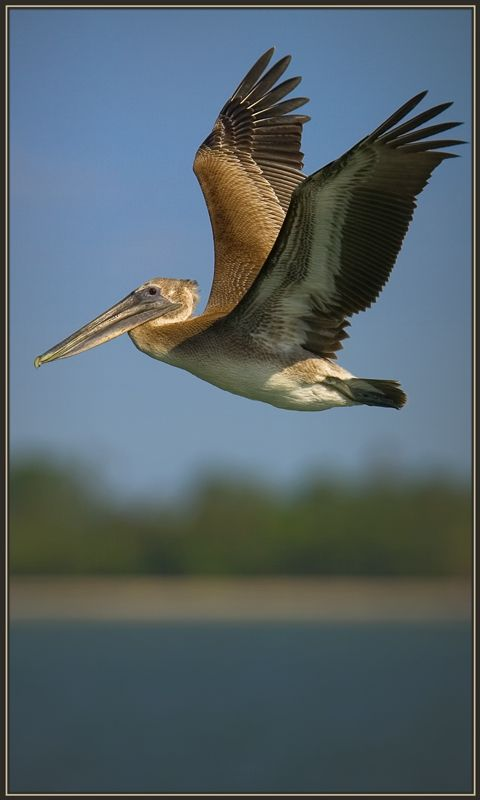 Flying Low - Sanibel Island, Florida by Gregory Wagner