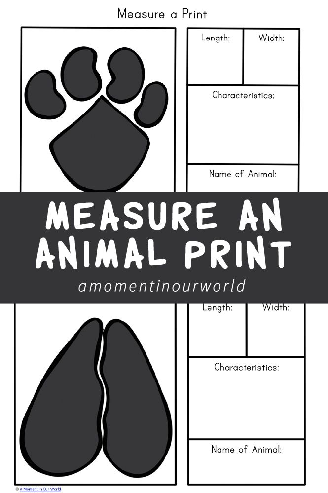 Animals leave their prints all over the place. In this printable pack, they will get to measure an animal print and learn all about it.