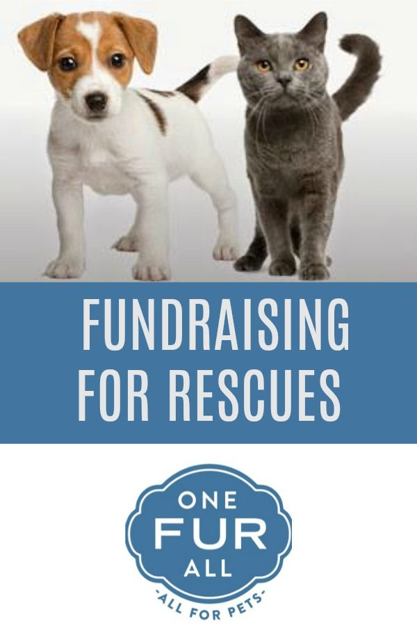 Pet House Candle Fundraising Opportunity For Rescues Animal