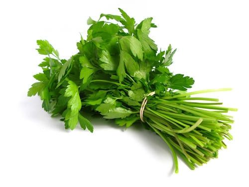 Coriander - ORGANIC - Herb - 100 Seeds | Seeds for Africa