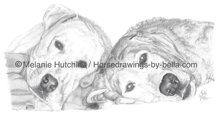 There is always room for dogs! Portrait of Aiden and Mandy.  Copyright Melanie Hutchins / horsedrawings-by-bella  Follow me on Facebook: https://www.facebook.com/Horsedrawingsbybella.MelanieHutchins Twitter: https://twitter.com/MelHTheArtist YouTube: https://www.youtube.com/channel/UCZDEjNKuowAo92BhnMWWBzA