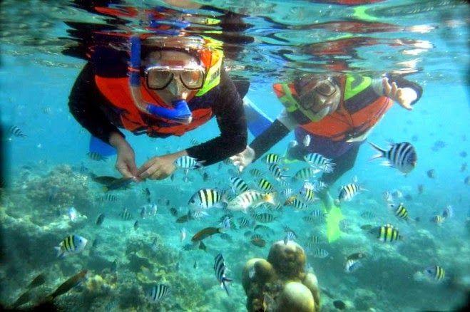 Snorkling - Wisata Indonesia   Seputar Informasi Tempat Wisata Indonesia