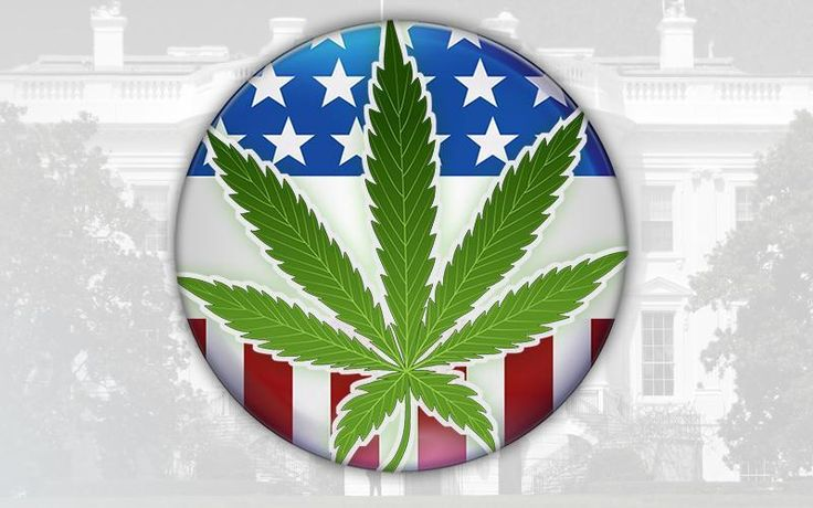 Where do the 2016 presidential candidates stand on #cannabis?