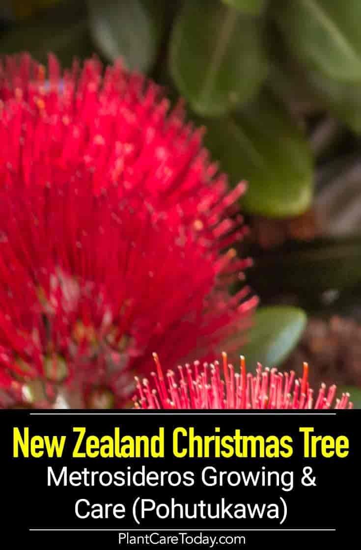 Elsa Bags Diy How To Make Bottle Brush Christmas Trees Bottle Brush Christmas Trees Christmas Gift Shop Christmas Wishes