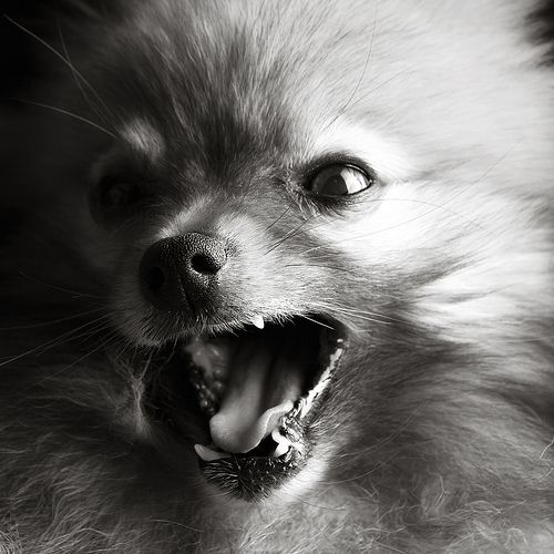 """""""A yawn is a silent shout."""" 