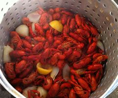 I used this recipe about two weeks ago and loved it!!! (use the mushrooms you wont be sorry) Crawfish Boil Recipe and Video for How To Properly Cook Crawfish